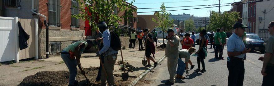 Volunteer to plant trees!