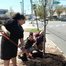 Celebrating trees in Camden and Newark