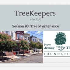 TreeKeepers 2020