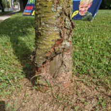 Tree Crimes Part 2