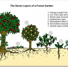Food Forests – A Solution to Food Insecurity?